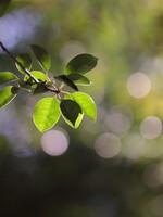 広葉樹の玉ボケ