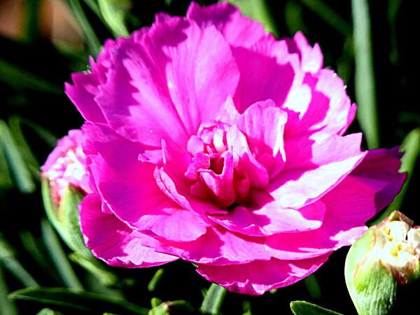 鉢の花を接写 1