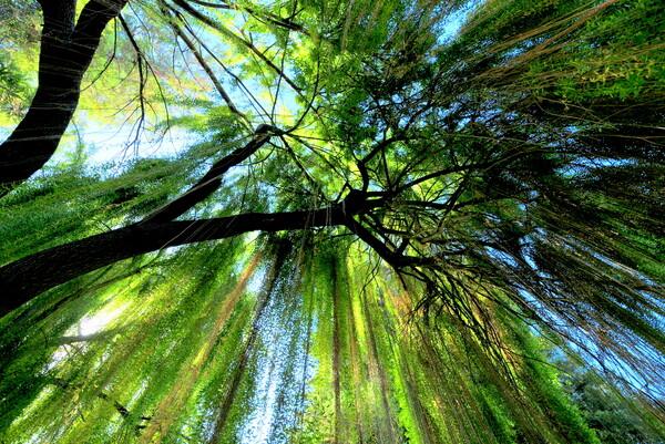 【木】この木なんの木気になる木?