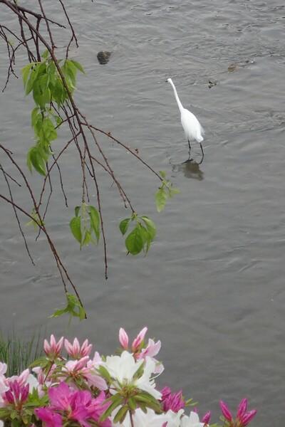 鴨川の花鳥(2)