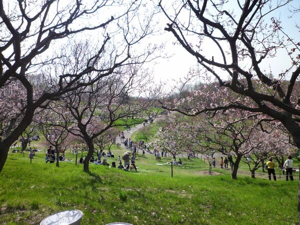 【花のある情景】桜だらけぇ〜♪