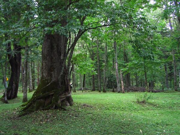 チミケップ湖の原生林