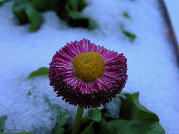 雪を冠ってひっそりと!