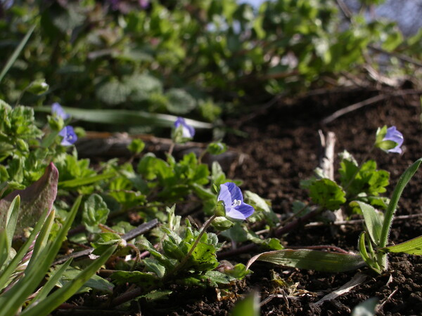 土の上に咲く花