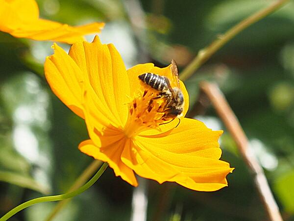【元気】 蜂さんUP