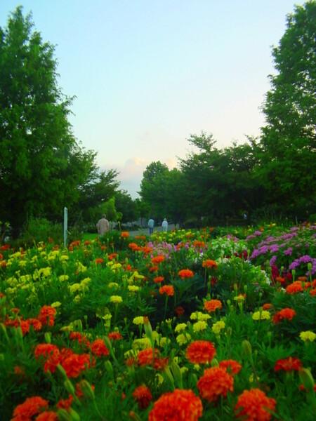 早朝の公園