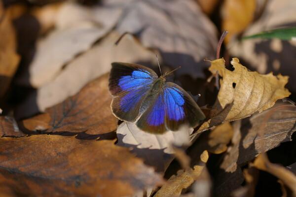 【いのち】 冬の蝶