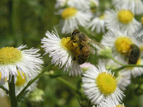 このハチの動きは?
