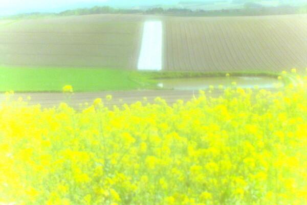 【この色 好き!】 春の色