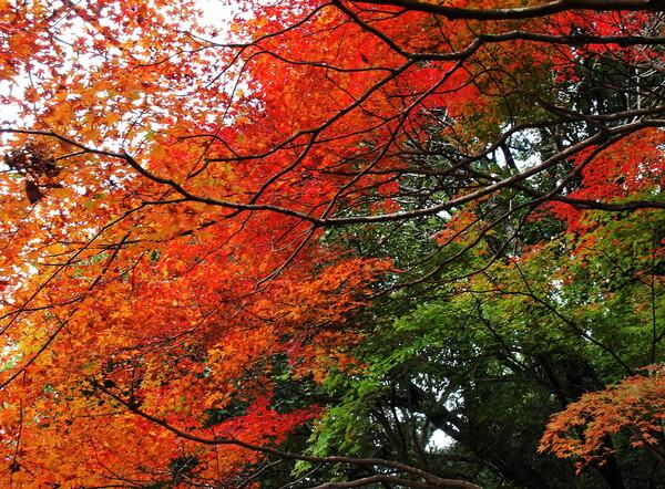 【絵のような】紅葉の橋