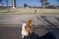 散歩するブタさんを呆然と見つめるカイちゅわんを見ている私B