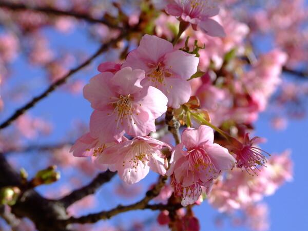 春の香り①