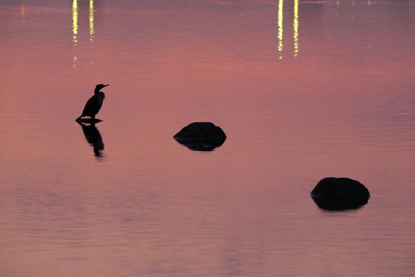 朝焼けの川面