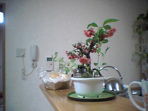 【花のある情景】ファイルNo.68
