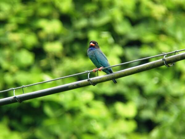 夏の鳥(1)