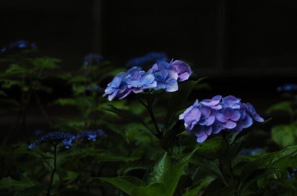 紫Jpeg