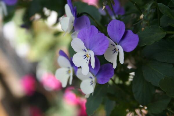 〔締〕かわいい花