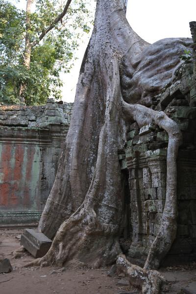 巨樹の生きざま