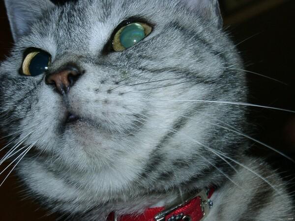 【猫】絞り開放