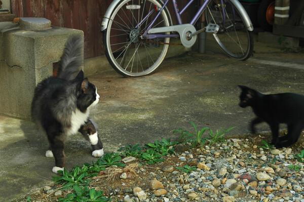 D70で愛猫二匹