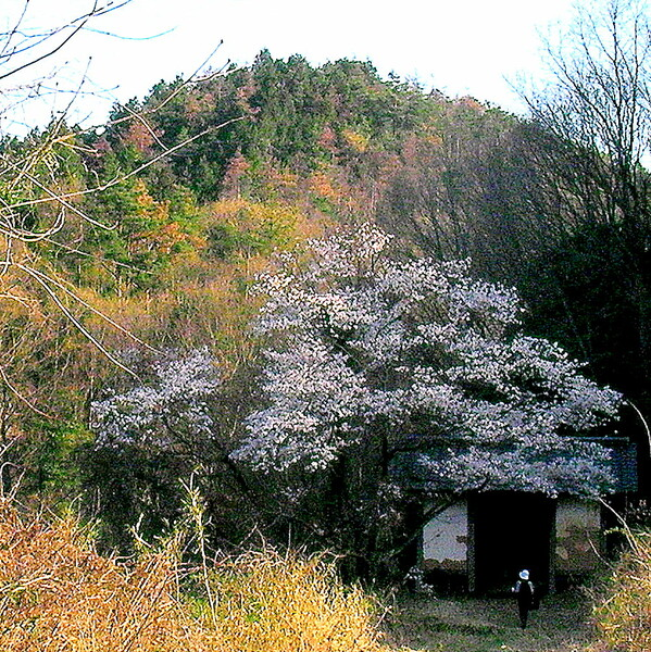 【古】 棒澤寺の山門