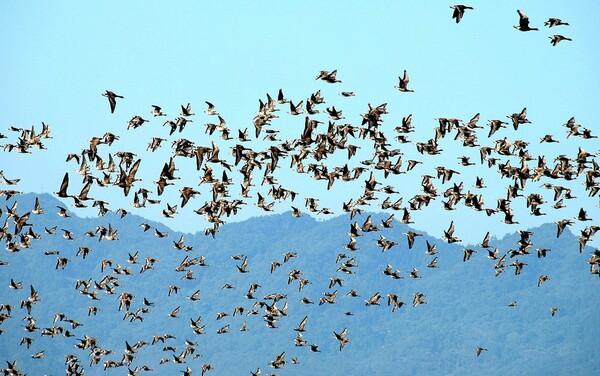 【天】群れが飛ぶ