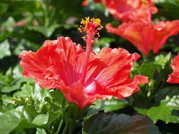 赤い花が鮮烈に