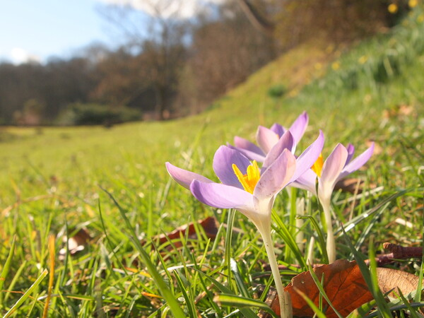 Spring has come to the northern country!