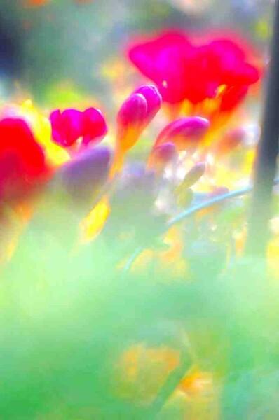 【この色 好き!】 春の色#2