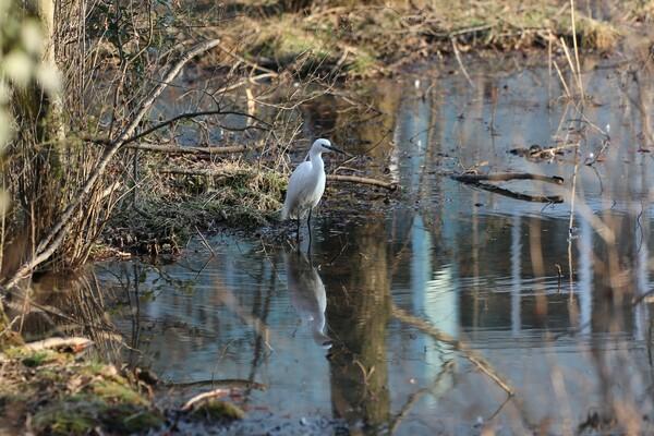 裏山の小さな湿地で