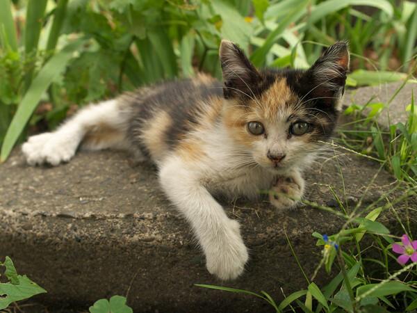 【猫】 未知との遭遇