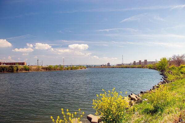 【花のある風景】河川敷に咲く