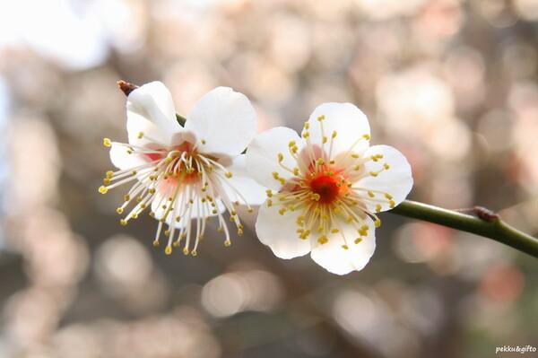 撮り直した花