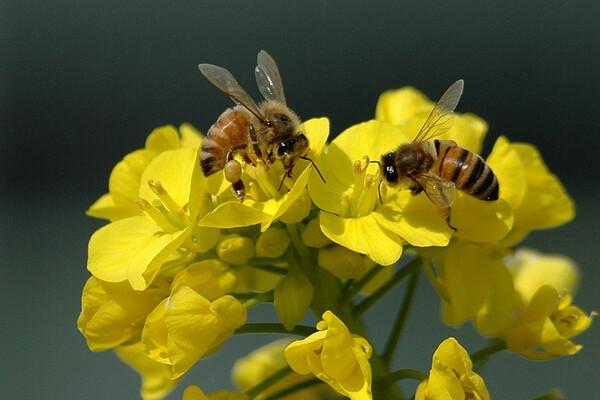 【春】蜜の香り
