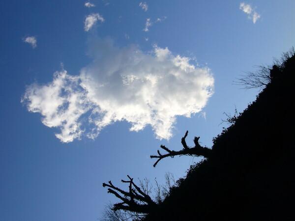モアイな木と雲