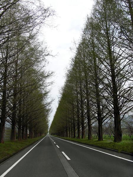 (わびさび)並木