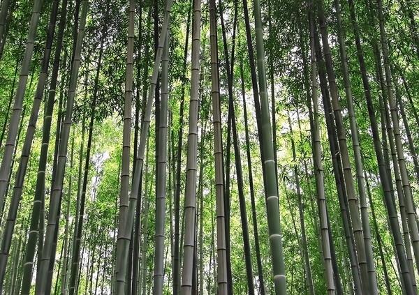 【おだやかに・・・春】竹林