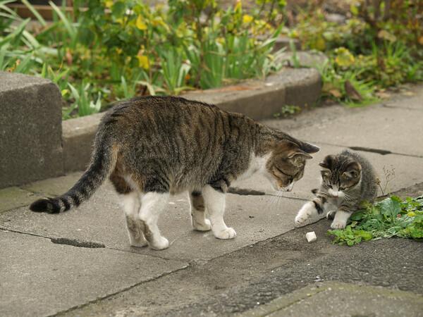 【猫】 母と子