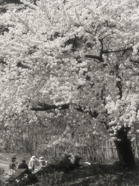 記憶の中のいつか見た春