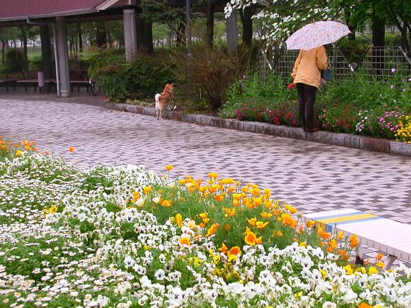 【花のある情景】 雨の日