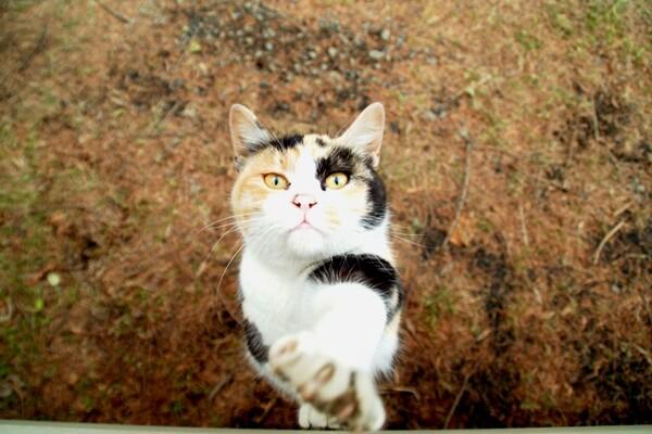 【猫】さて、ここでジャンケンです。。。