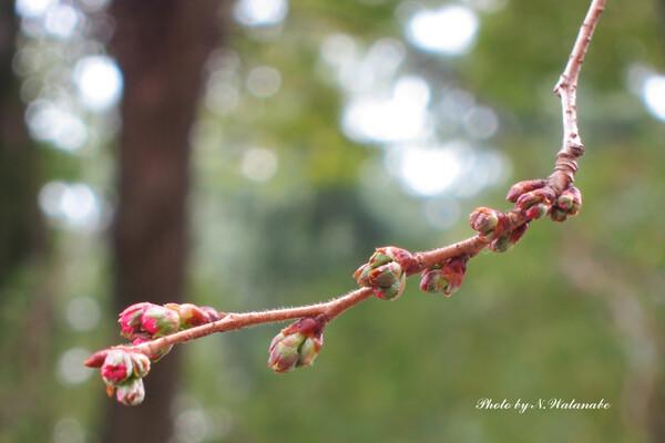 春の色発見