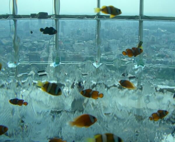 熱帯魚と街並み