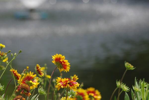 花は画面の片隅