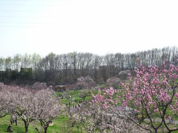 【花のある情景】春の公園2