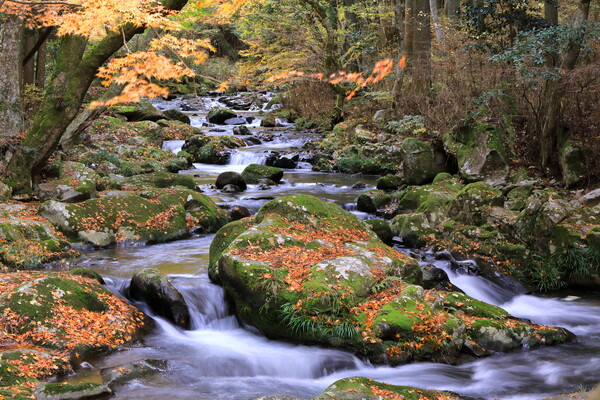 三河の渓流
