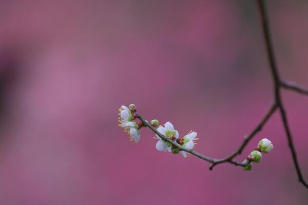 飛鳥の春を独り占め(2)