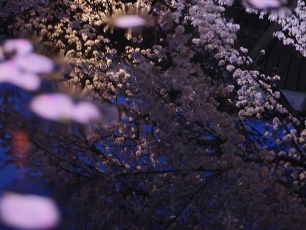 新宿常円寺の金魚蜂