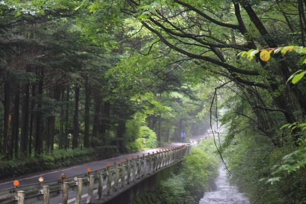 ここも軽井沢