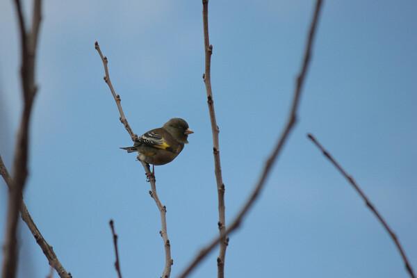 川辺の小鳥